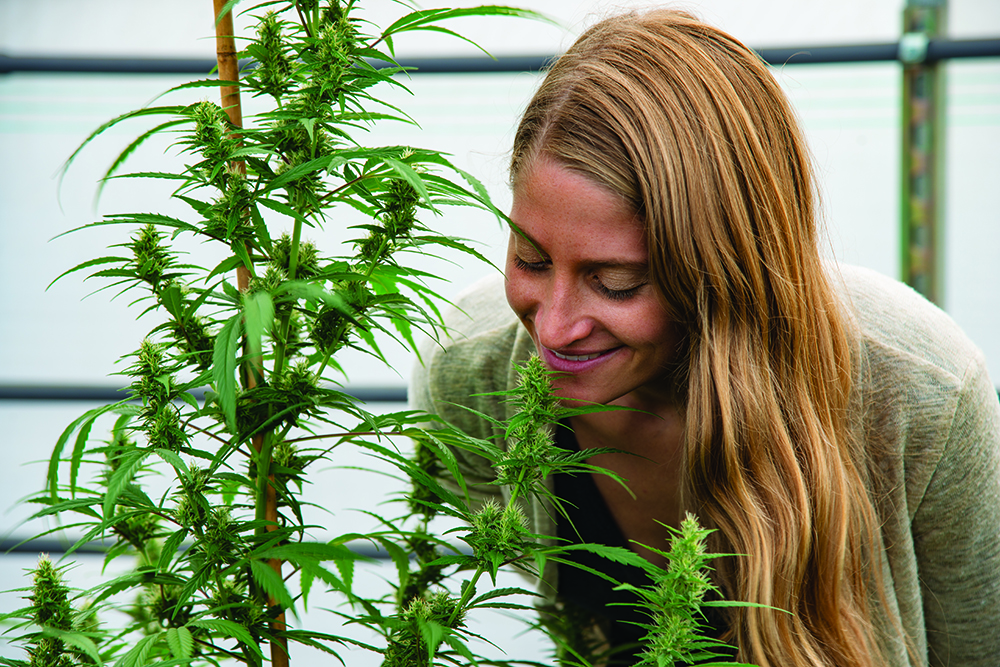 Willamette Hemp Co.: Growing the Industrial Market Organically
