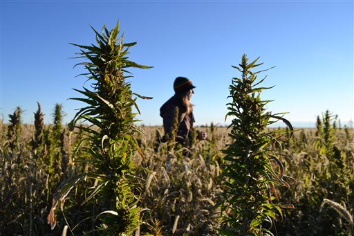 South Carolina Considers Industrial Hemp