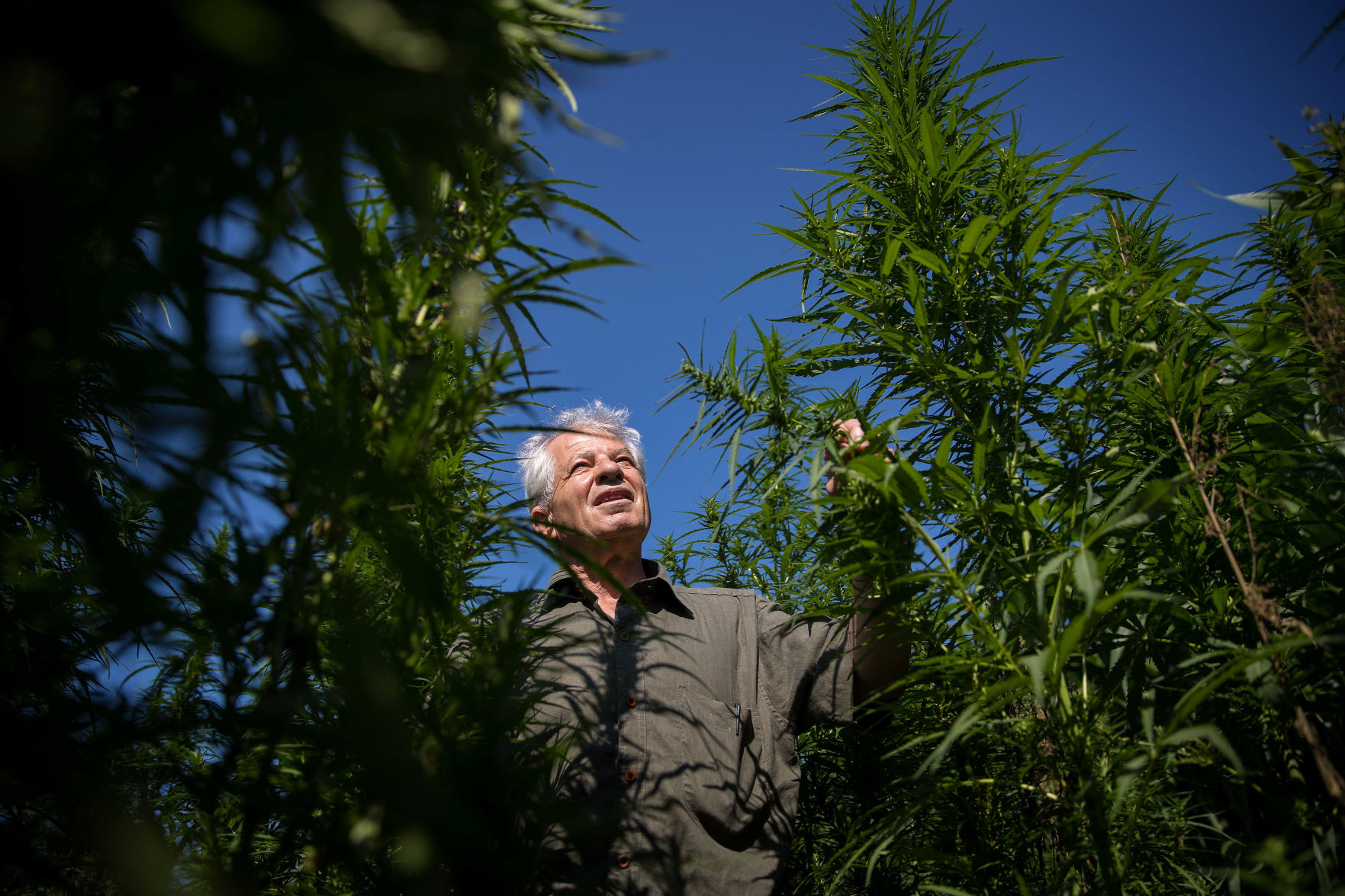UNL's Research into Industrial Hemp has Already Yielded Some Key Information