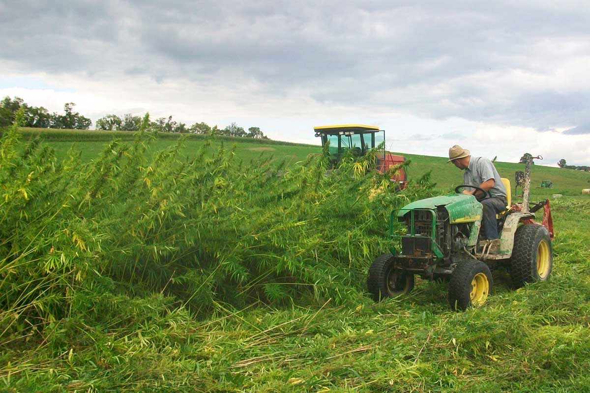 PA's Once Vast Hemp Harvest Reemerges from the Weeds